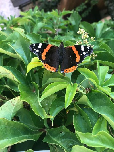 Butterfly in Vieste Green Colors Colori Vieste Farfalla Butterfly Leaf Plant Part Insect Animals In The Wild Invertebrate Animal Wildlife One Animal Plant Animal Themes Beauty In Nature Butterfly - Insect Animal Close-up Nature Growth Green Color Animal Wing Day Flower No People