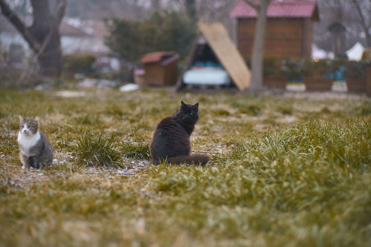 Cat sitting on field