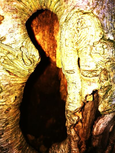 Close-up Outdoors No People Full Frame Nature Day Beauty In Nature Tree Whats Hiding Tree Bark Texture