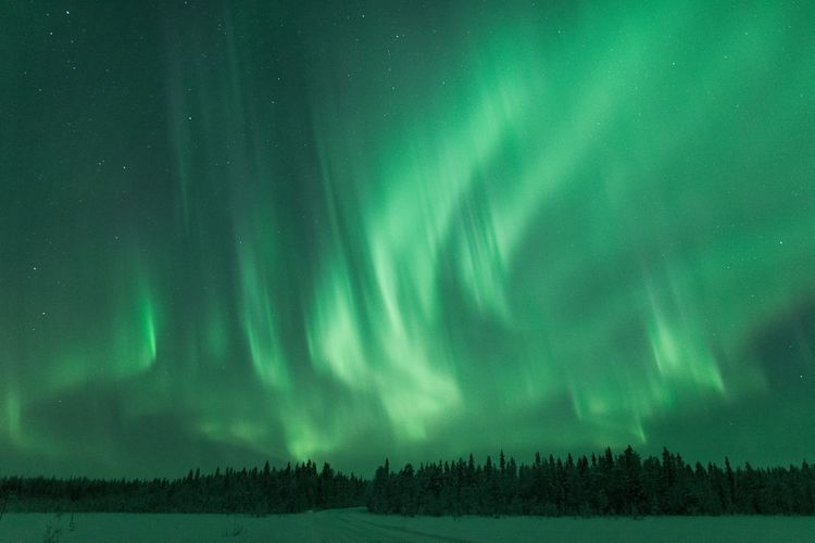 Flames from north Beauty In Nature Scenics - Nature Tree Night Tranquil Scene Green Color Sky Tranquility Landscape Land No People Star - Space Nature Astronomy Long Exposure Aurora Polaris Power In Nature Travel Lapland Scenics Nature_collection Hanging Out Taking Photos Enjoying Life Explore