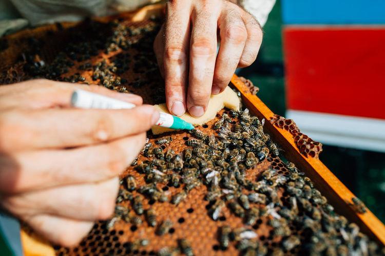 Cropped hand applying medicine on honey bee