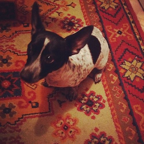 Соня Dog Beautiful Follow followme