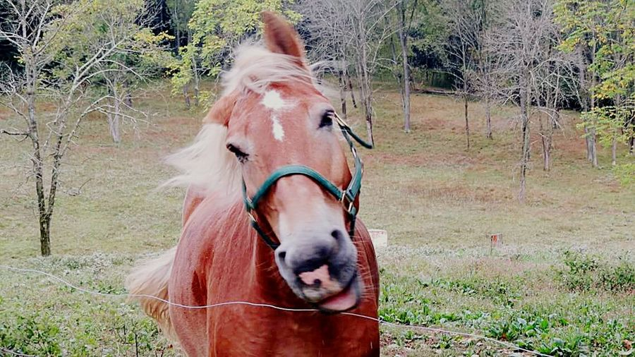 Horse Domestic Animals Animal Themes Livestock Matilda Smiles One Animal Mane Bridle Grass No People Close Up Photography Outdoors Trees And Nature