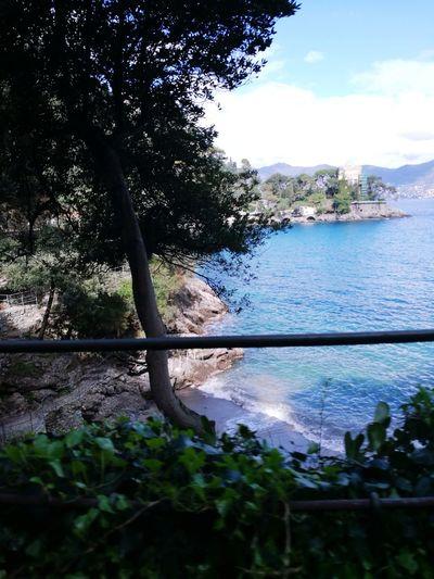 Tree Water Nature Reflection Beauty In Nature Méditerranée Italy🇮🇹 Les 5 Terres Un Amour De Région😍 A L'ombre D'un Souvenir Lifestyles My Style ❤