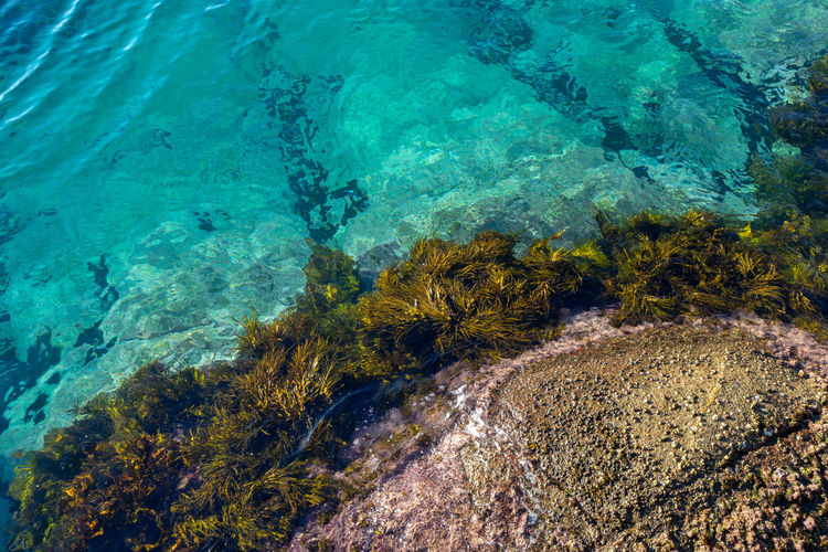 Clean ocean water at montague island, australia.