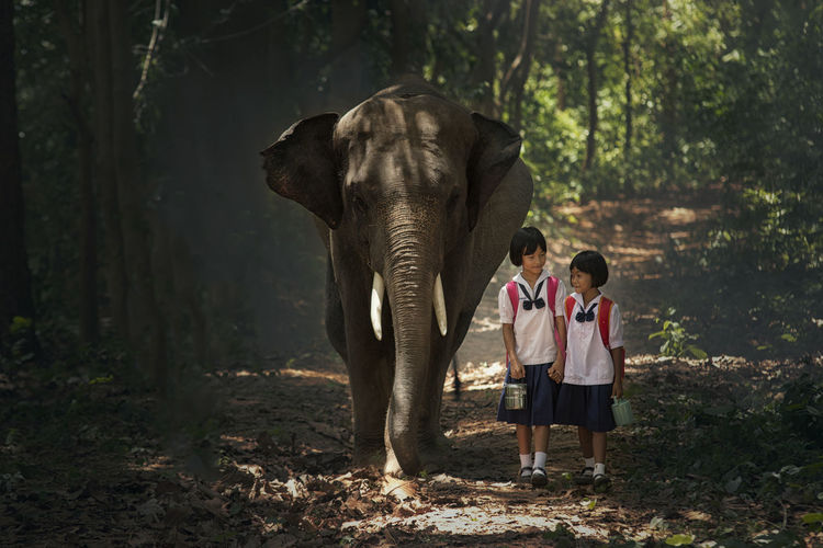 Student and elephants come back to home at elephant village. Animal Themes Animals In The Wild Bonding Boys Childhood Day Domestic Animals Elephant Forest Full Length Mammal Nature Outdoors People Real People Rear View Standing Togetherness Tree Two People
