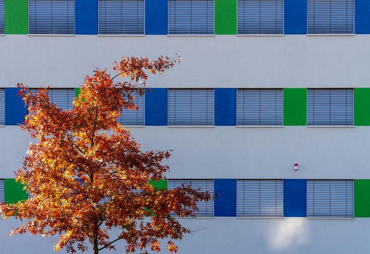 Autumn Tree Against Building In City