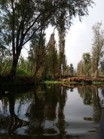 Reflection Photography Relaxing Water Agua Xochimilco DF Xochimilco Tree Water Reflection Lake Tranquil Scene Growth Tranquility Scenics Waterfront Tree Trunk Beauty In Nature Branch Nature Calm Non-urban Scene Day Sky Green Color
