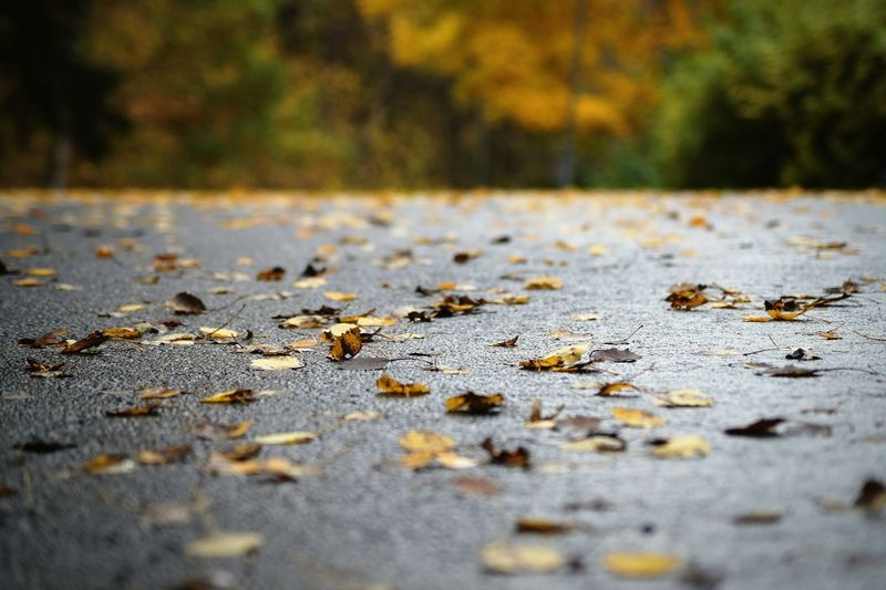 Fallen Leaves On Road During Autumn