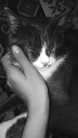 Cat Kedi Duman Animal