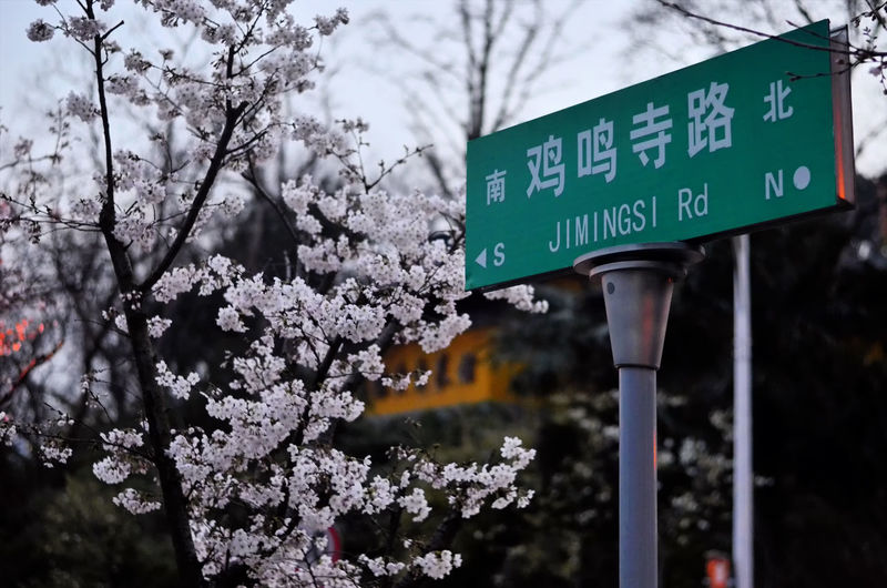 Close-up of road sign against trees