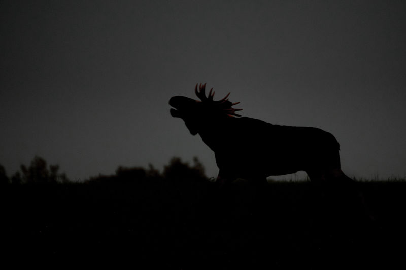Silhouette of horse on field against sky during sunset