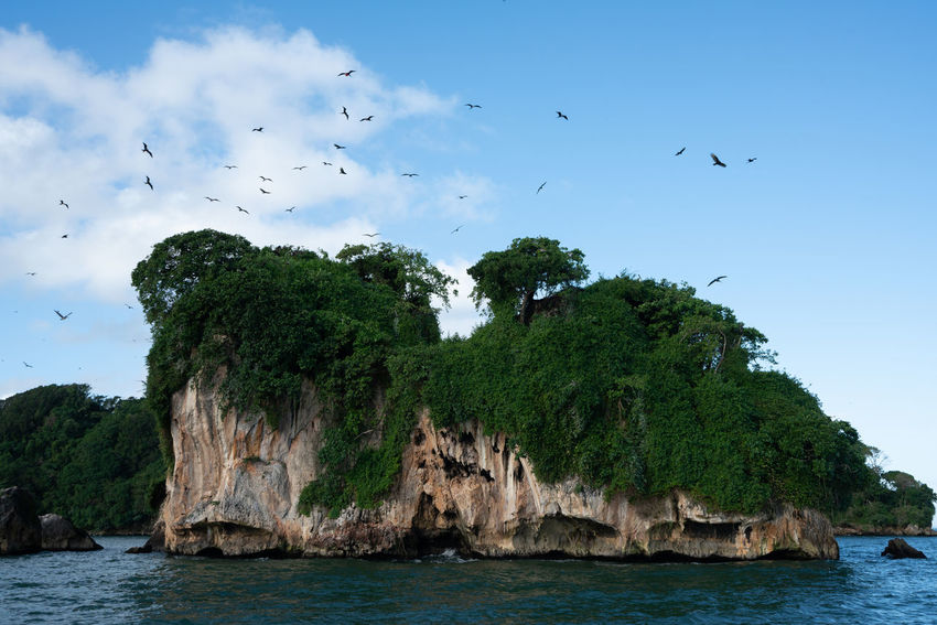 Los Haitises National Park - Dominican Republic. Dominican Republic Los Haitises Animal Animal Themes Animal Wildlife Animals In The Wild Beauty In Nature Bird Day Flock Of Birds Flying Group Of Animals Land Large Group Of Animals Nature No People Outdoors Rock Rock - Object Samana Scenics - Nature Sea Sky Vertebrate Water