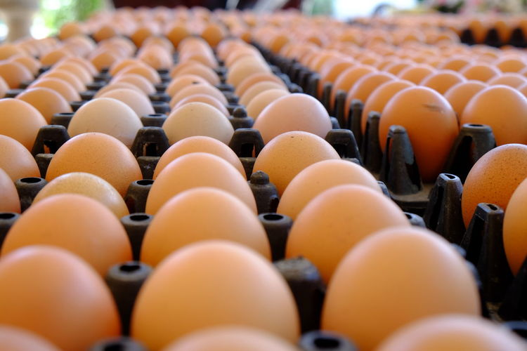 Close-up of eggs on cartons