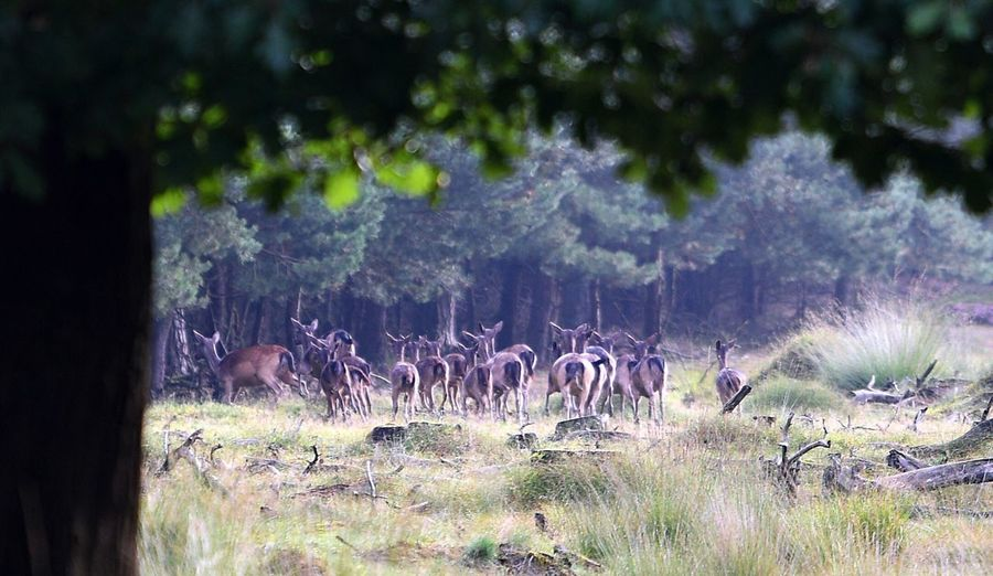 Deer at deelerwoud Animals In The Wild Large Group Of Animals Animal Wildlife Beauty In Nature