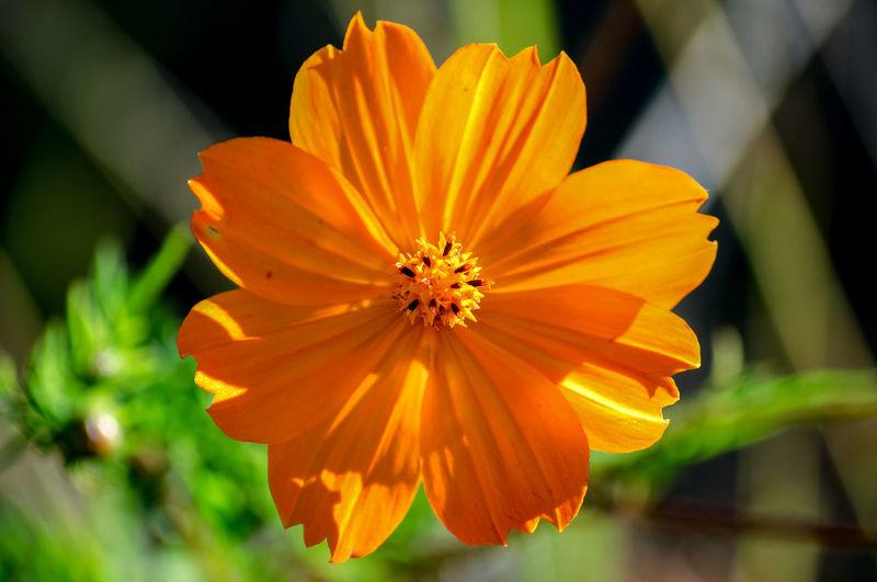 Flower. Natural