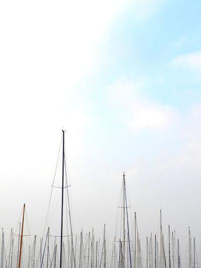 Boat trees
