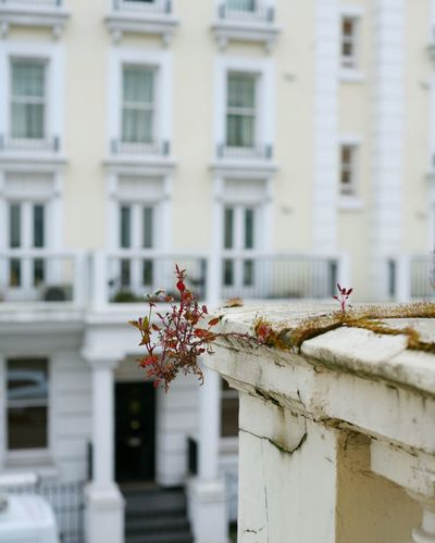 Building Exterior Architecture Built Structure One Animal Window Day Outdoors Flower Residential Building Animal Themes Animal Wildlife No People City Perching Bird Dragon Close-up The Secret Spaces Art Is Everywhere London Lifestyle Selective Focus London Streets London Springtime Neighborhood Map