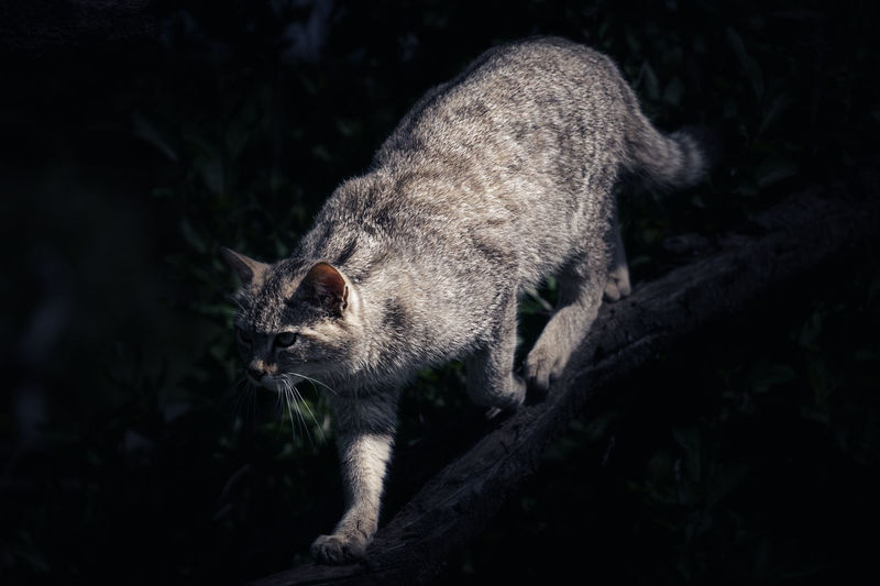Close-up of a cat on tree