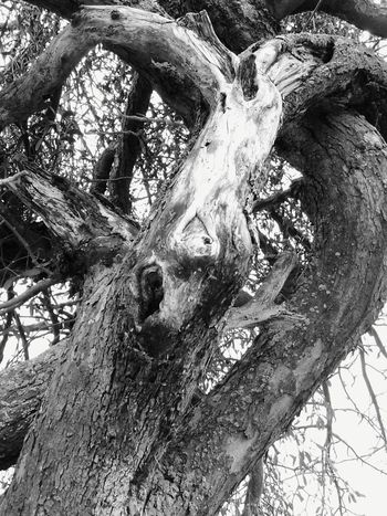 La Bête, the Beast...Arbre Arbres Arbremort Tronc Boissec Bois Figures Monstres Labete TheBeast Tree Trunk Tree Day Outdoors Nature No People Dead Tree Rural Landscape Scenics Nature_collection Tree Fragility Rural Scene Tranquility Branch