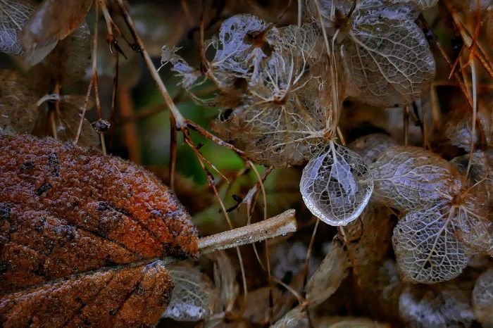 From My Point Of View Frozen Nature Plant Close-up Outdoors Beauty In Nature Day No People Eyeemphotography Freshness Cold Days Authentic Moments StillLifePhotography Dezember 2016 Nature Cold Temperature Weather Taking Photos Macro Photography Close Up Photography Outside Photography