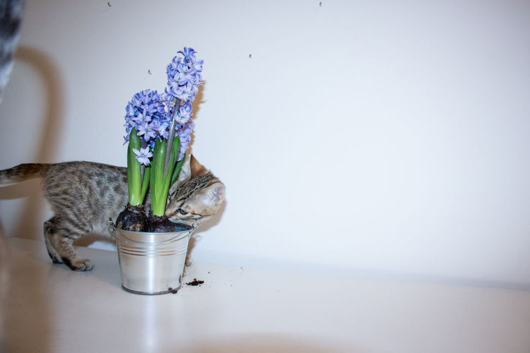 Close-up of flower in vase on table