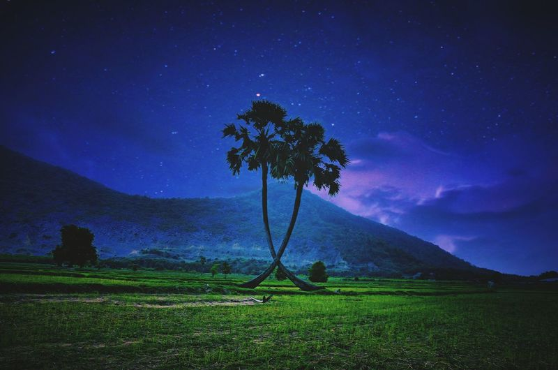 Scenic View Of Palm Trees On Field Against Sky At Night