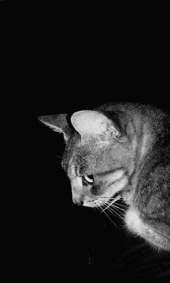 Cat's life🐱 Blackandwhite Cat Selfiecat Serius Seriusface