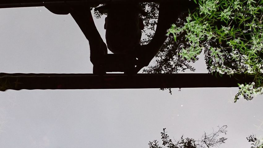Mirror Lifestyles Low Angle View Nature One Person Outdoors Photographer Reflections Self Portrait Silhouette