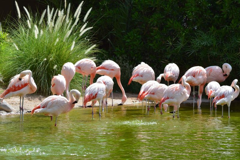 Wildlife Flamingo Animal Water Animal Themes Bird Group Of Animals Animals In The Wild