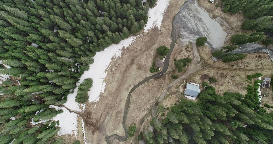 Aerial Shot Aerial Photography Picea Abies River Aerial View Summer Exploratorium Tree Water High Angle View Field Grass Green Color Close-up