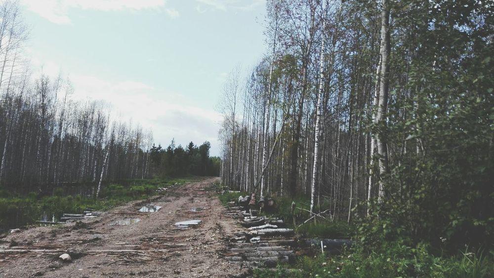 Russia Huawei Shots Nature Miles Away
