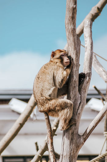View of a monkey sitting on tree