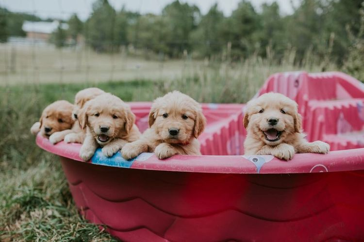 Puppy on pink outdoors