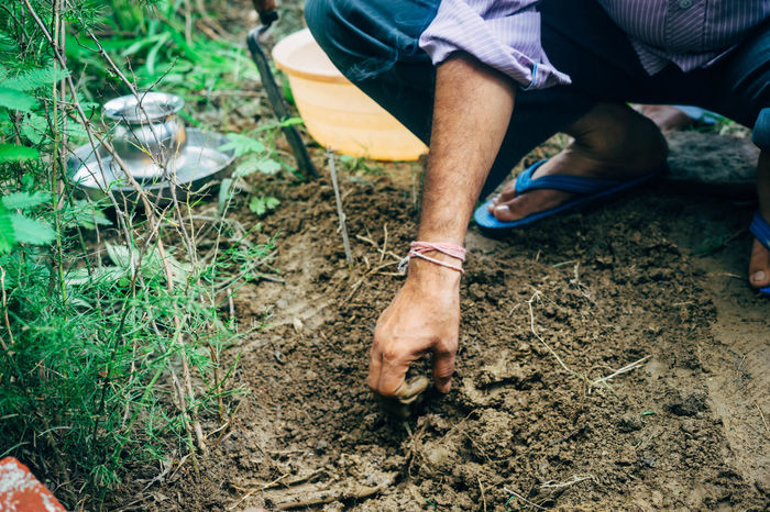 Ayurveda Barefoot Casual Clothing Day Field Garden Harvest Human Foot Lifestyles Low Section Outdoors Person Selective Focus Shatavari Standing Vacations