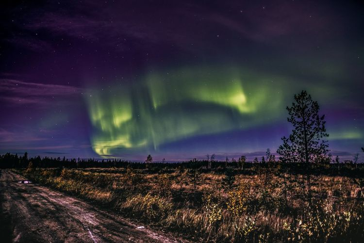 Auroras in the moonlight Night Sky Beauty In Nature Landscape Star - Space Plant Nature Tranquility Illuminated Tree Land Green Color Tranquil Scene Astronomy Outdoors Purple Northern Lights Aurora Borealis Wilderness Scenics Freshness Enjoying Life Travel Lapland Finland