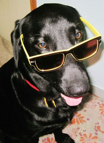 Dog Lover My Dogs Are Cooler Than Your Kids I Love My Dog Pets Corner Dogoftheday Dog❤