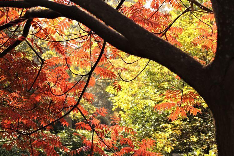 Autumn Leaves Japan Autmun Autumn Beauty In Nature Outdoors Tree