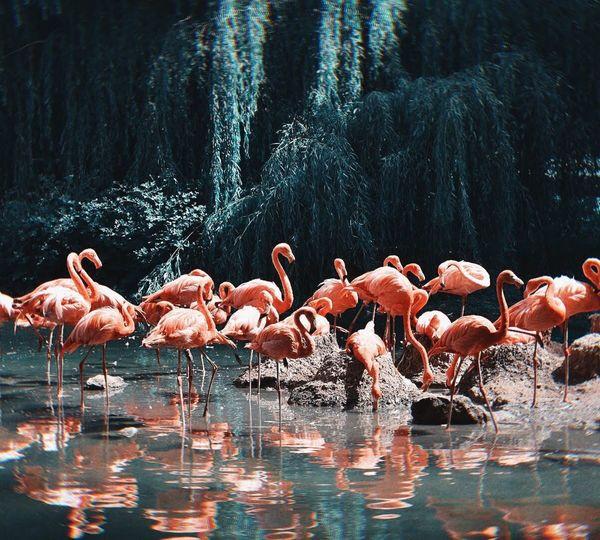 Birds in a lake