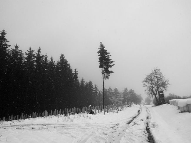 forest at a snowy road Tree Beauty In Nature Black And White Blackandwhite Blackandwhite Photography Clear Sky Cold Temperature Day Frozen Landscape Landscapes Nature No People Outdoors Road Scenics Sky Snow Snowing Tranquil Scene Tranquility Tree Weather White Color Winter