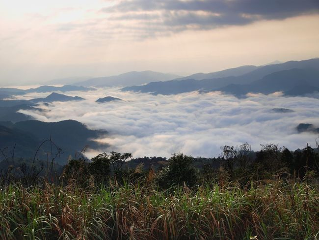 A cloud-sea in north-eastern Taiwan, stretching away into the distance. Ilan County, Taiwan Taiwan Yilan, Taiwan Beauty In Nature Cloud - Sky Cloud Sea (雲海) Day Grass Growth Landscape Mountain Mountain Hiking Mountain Range Nature No People Outdoors Plant Scenics Sky Tranquil Scene Tranquility