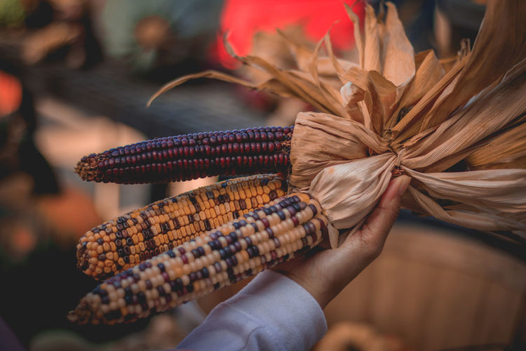 Close-Up Of Hand Holding Corns