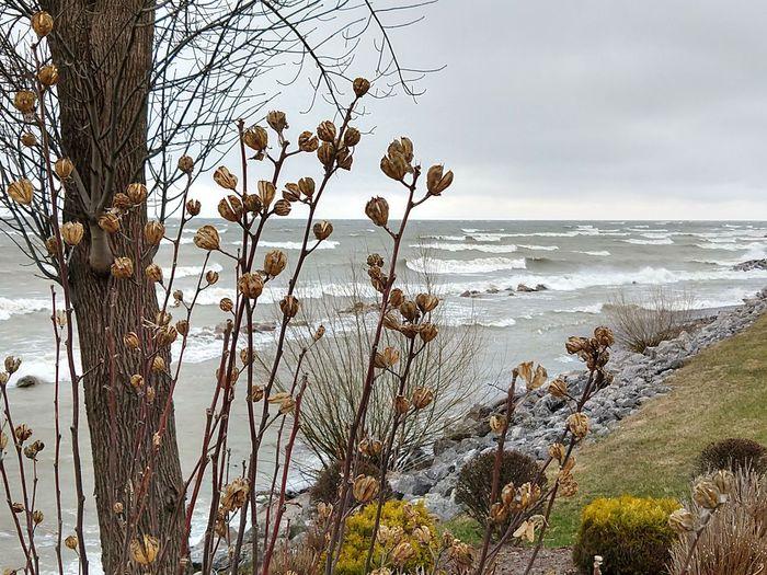 Lake Erie - Ohio Waves White Cap Sea Water Beach Branch Wave Sky Landscape