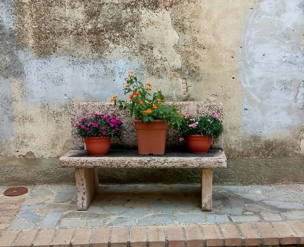panchina Old City Flower Potted Plant Plant Life
