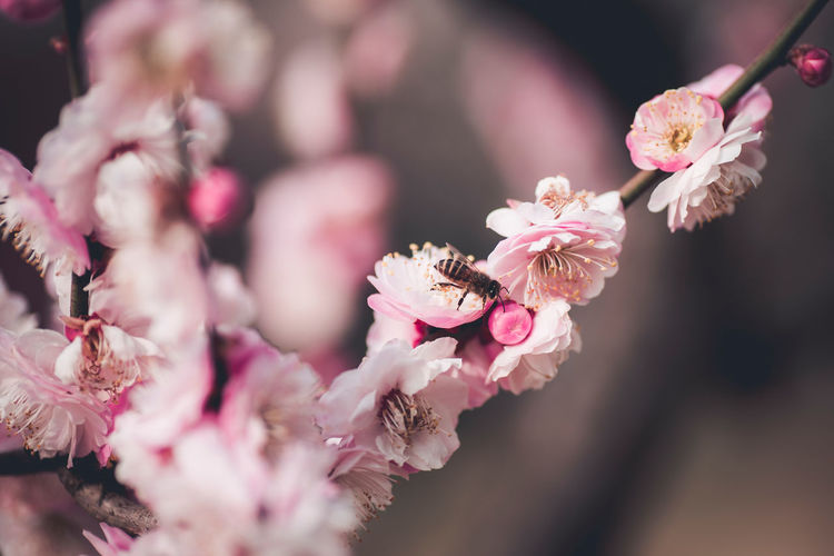 Bloom Flower Nature New Born Petal Plum Blossom Spring Warm