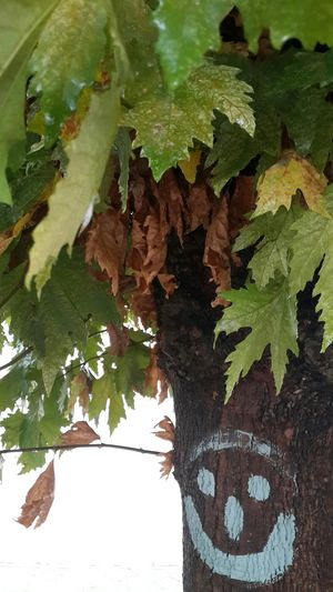 Rainy Day Smile Autumn Hagging A Tree Nature_collection Color EyeEm Nature Lover The Purist (no Edit, No Filter) Tree_collection  Streetphotography