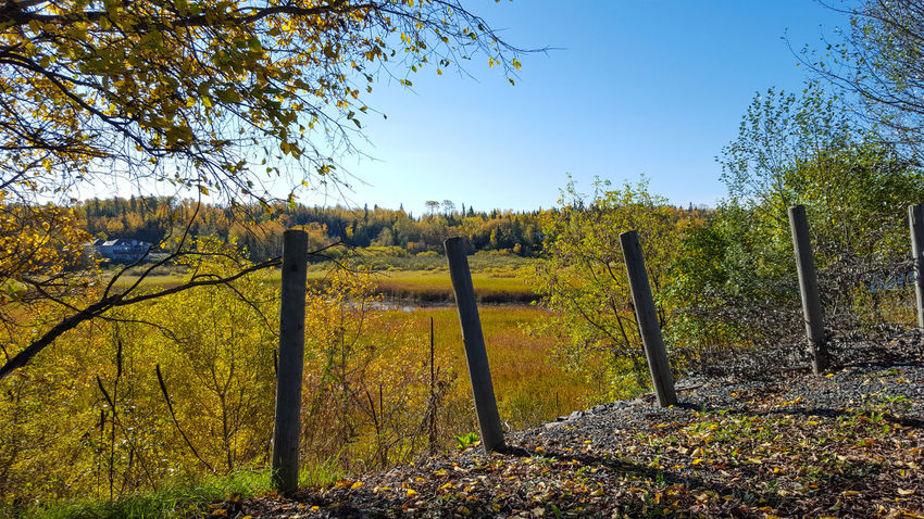 Chainlink Fence No People Nature Beauty In Nature Colour Everywhere Rural Scene Beauty In Nature Landscape EyeEmNewHere Photography Art Just Passing Through Half The World Away EyeEm Selects EyeEm New Here Art In Nature Lines & Curves Creativity Has No Limits Oh Canada! The Week On EyeEm Fall Is Here. Fall Beauty Multi Colored Backgrounds Tranquil Scene Outdoors