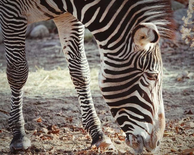 Animal Mammal