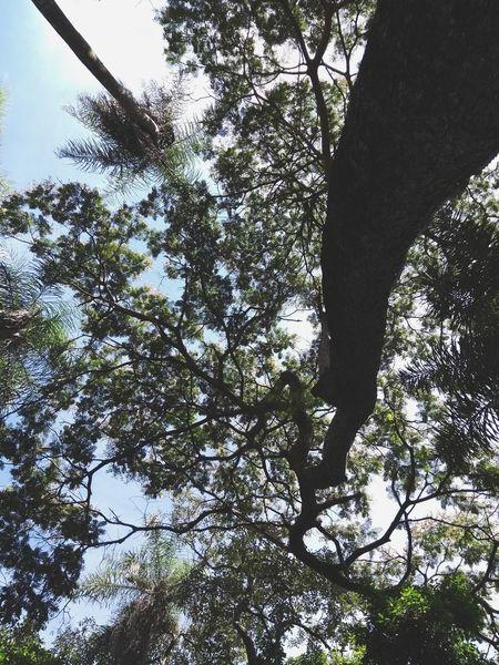 bajo las hojas Tree Low Angle View Nature