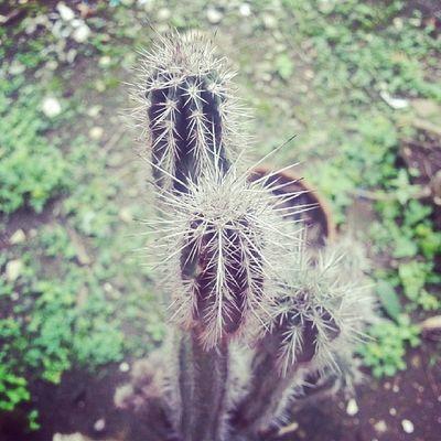 Kaktus Flower Morning Instagram Instagood Likeforlike Like4like INDONESIA